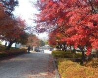 ギャラリー前の紅葉